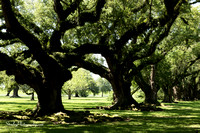 Oak Alley Plantation 2015 04 19 - 0016
