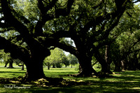Oak Alley Plantation 2015 04 19 - 0017