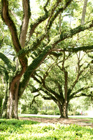 Oak Alley Plantation 2015 04 19 - 0015
