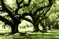 Oak Alley Plantation 2015 04 19 - 0018