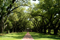 Oak Alley Plantation 2015 04 19 - 0028