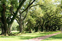 Oak Alley Plantation 2015 04 19 - 0040