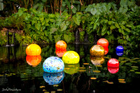 Chihuly at Fairchild Gardens  2015 01 08 - 0075