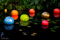 Chihuly at Fairchild Gardens  2015 01 08 - 0078-2
