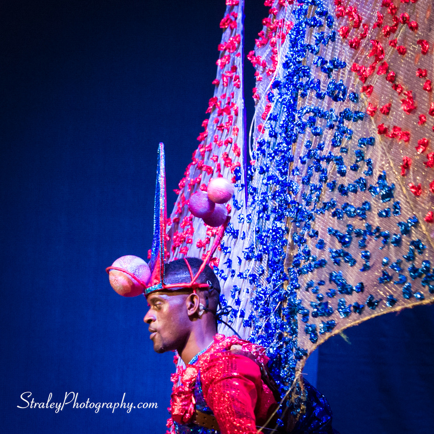 King and Queen of the Bands 2016 08 07 - 0453