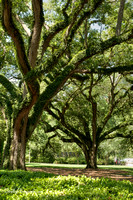 Oak Alley Plantation 2015 04 19 - 0013_4_5
