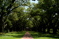 Oak Alley Plantation 2015 04 19 - 0029